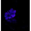 Samsung Galaxy Z Flip 5G 256GB